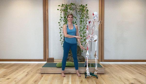 Hero Image Anatomy for Yoga Part 3