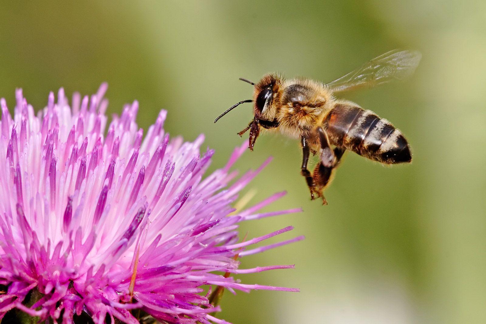 Hero Image Humming bee breath